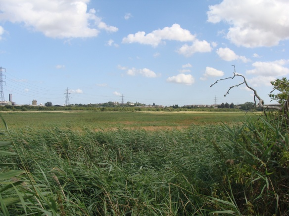 Botany Marsh
