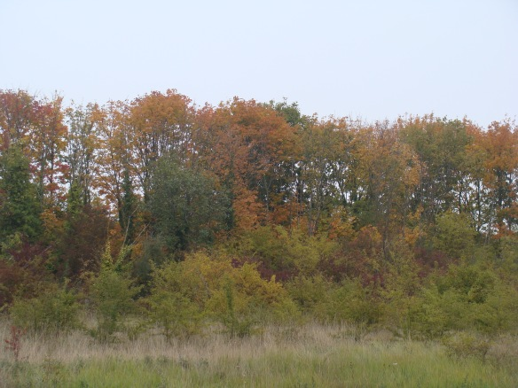 Autumn colour on Swanscombe marshes, Oct 2015